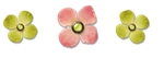 szlaczek kwiatuszki
